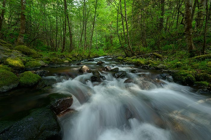 back button focus used to capture moving water in the forest