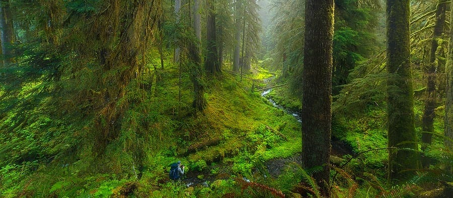 foggy rainforest olympic national park washington state
